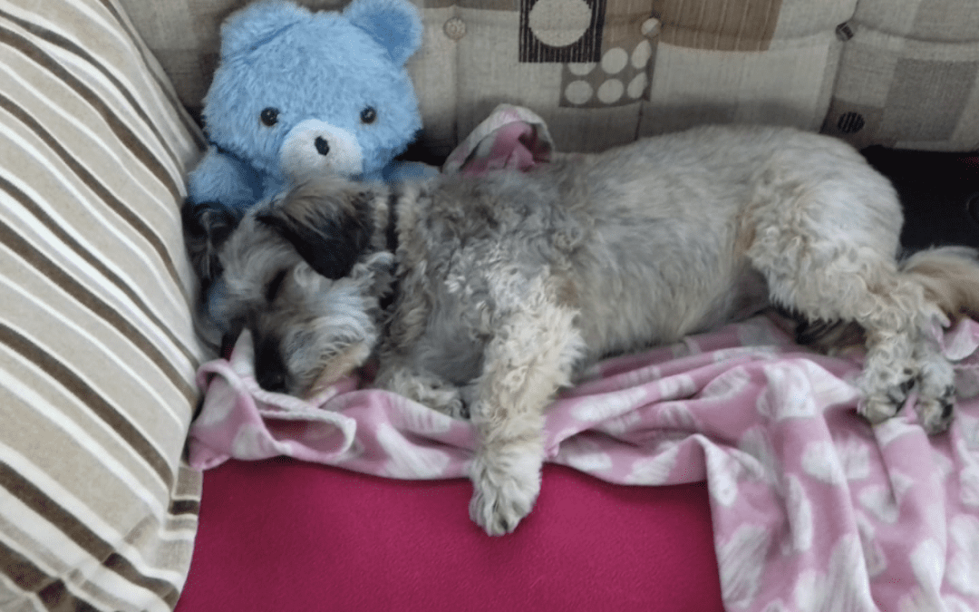 Bringing Your Romanian Rescue Dog Home Part 3