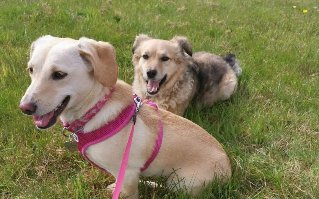 Bringing Your Romanian Rescue Dog Home Part 4