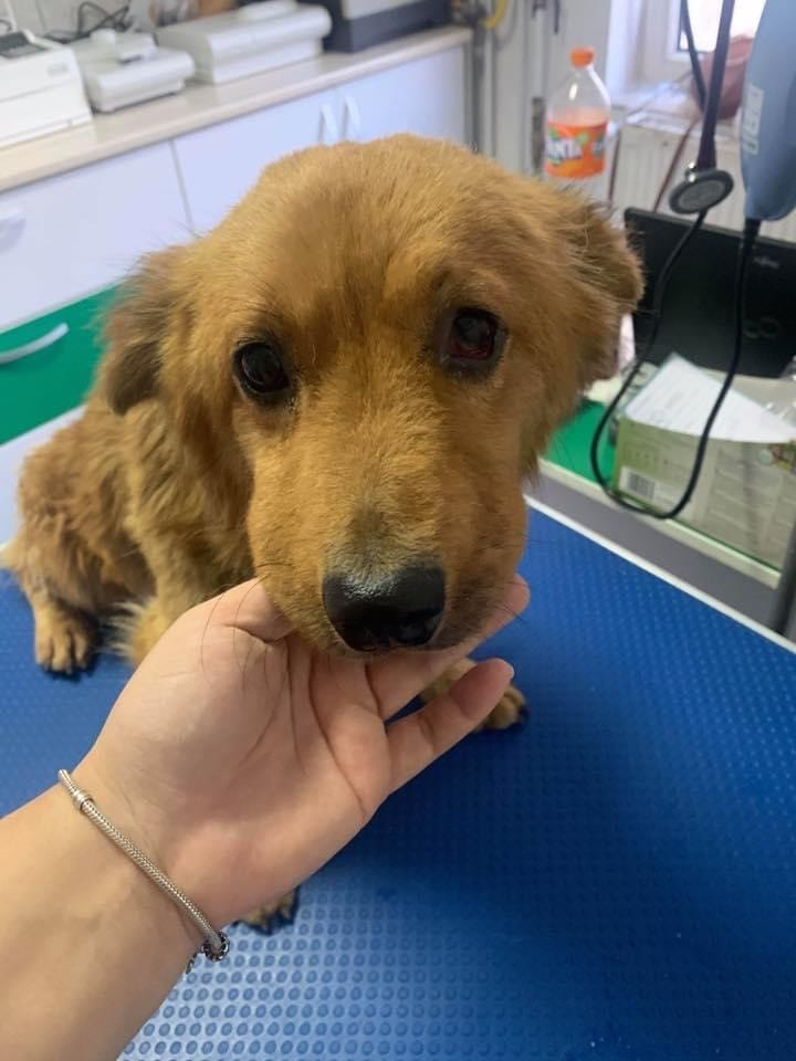 Sammy in the vets poorly first aid| 1 Dog At a Time Rescue UK