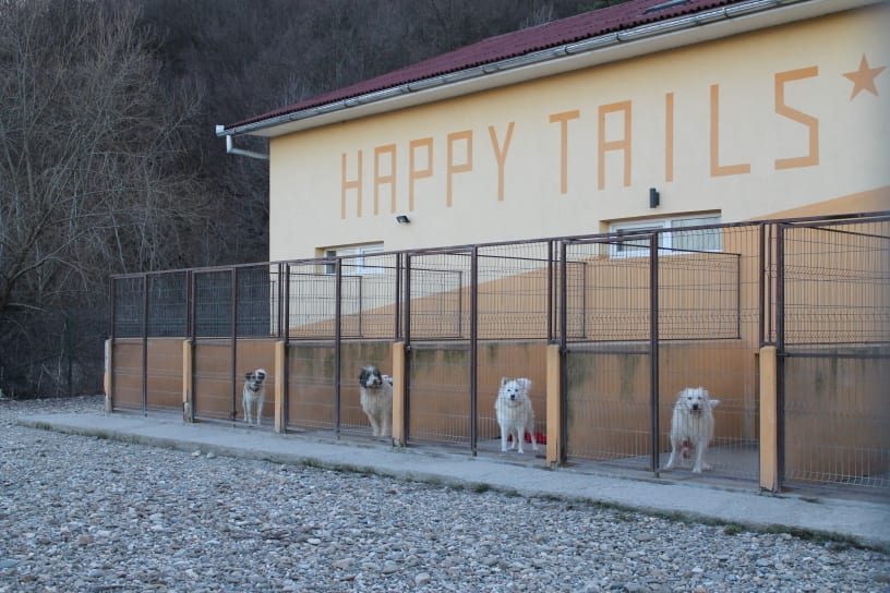A Day In The Life Of Happy Tails