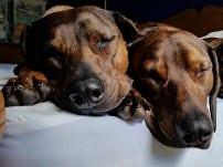 Lottie & Betty