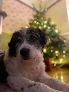 Dusty a Romanian Rescue Dog