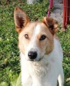 Annie - Reserved
