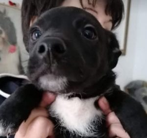 Bertie A Black And White Romanian Rescue Puppy | 1 Dog At a Time Rescue UK