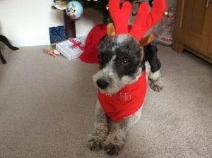 Dog in red reindeer ears christmas present | 1 Dog At a Time Rescue UK