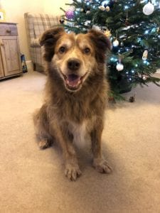 Ducu Romanian street dog in front of Christmas tree | 1 Dog At a Time Rescue UK