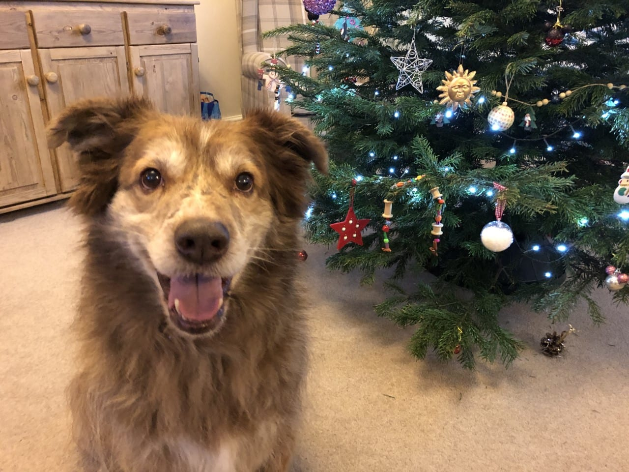 Ducu Romanian street dog next to Christmas tree | 1 Dog At a Time Rescue UK