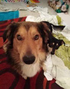 Guta and Mickey Romanian Rescue Dogs looking at the camera ¦ 1 Dog at a Time Rescue UK