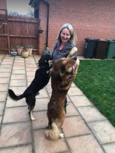 Guta and Mickey Romanian Rescue Dogs in the garden ¦ 1Dog at a Time Rescue UK