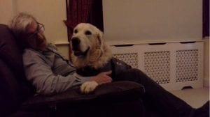 Harry Romanian street dog wearing a thundershirt scared of fireworks | 1 Dog At a Time Rescue UK