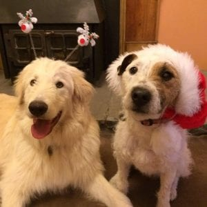 Rosie and Baxter Christmas hats in front of the fire| 1 Dog At a Time Rescue UK