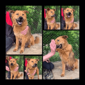 Roxy the Romanian rescue dog high five | 1 Dog At a Time Rescue UK | Dedicated To Rescuing and Rehoming Romanian Street Dogs
