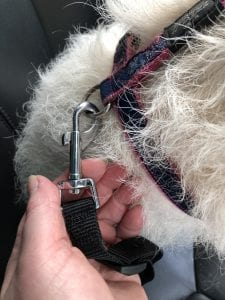 Dog seat belt attachment harness clip | 1 Dog At a Time Rescue UK | Dedicated To Rescuing and Rehoming Romanian Street Dogs