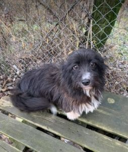 Bella black and white Romanian rescue dog 1 ¦ 1 Dog at a Time Rescue UK