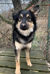 Jimmy medium sized black and tan Romanian Rescue Dog 6 ¦ 1 Dog at a Time Rescue UK