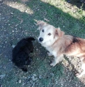 Linda a light coloured Romanian rescue dog ¦ 1Dog at a Time Rescue UK