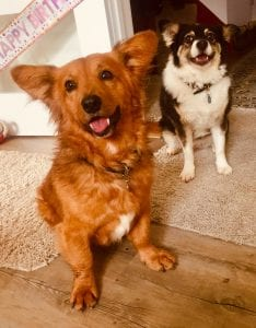 Sammy and Denisa rehomed Romanian dogs | 1 Dog At a Time Rescue UK | Dedicated To Rescuing and Rehoming Romanian Street Dogs
