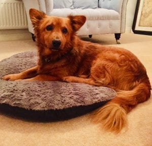 Sammy brown Romanian street dog rehomed| 1 Dog At a Time Rescue UK