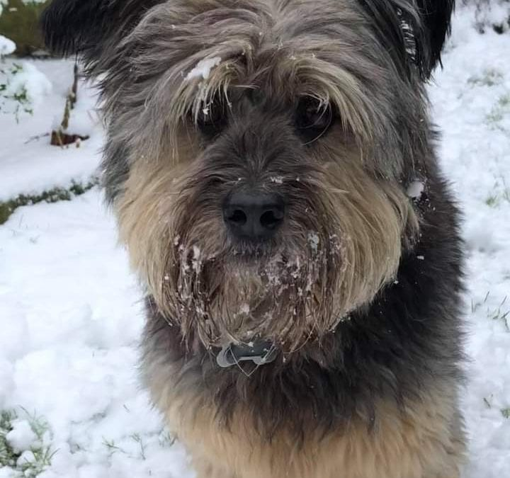Winter dangers to dogs