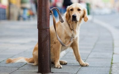 Keep your dog safe from theft