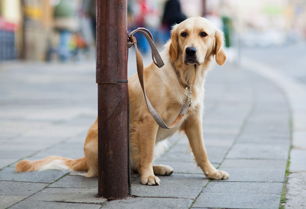 A brown dog tied up outside a shop | 1 Dog At a Time Rescue UK