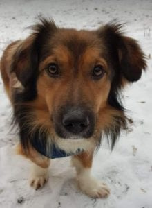 Jerry a black and tan Romanian rescue dog ¦ 1 Dog at a Time Rescue UK