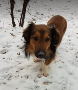Jerry a black and tan Romanian rescue do ¦ 1 Dog at a Time Rescue UK