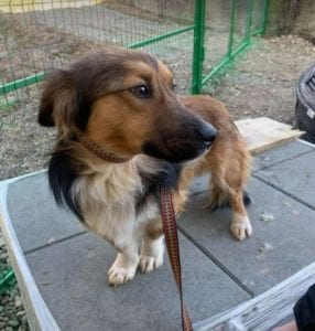 Jerry a black and tan Romanian rescue dog 3 ¦ 1 Dog at a Time Rescue UK
