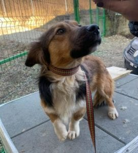 Jerry a black and tan Romanian rescue dog 6 ¦ 1 Dog at a Time Rescue UK