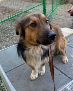 Jerry a black and tan Romanian rescue dog 8 ¦ 1 Dog at a Time Rescue UK