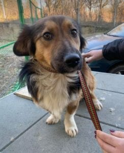 Jerry a black and tan Romanian rescue dog 9 ¦ 1 Dog at a Time Rescue UK