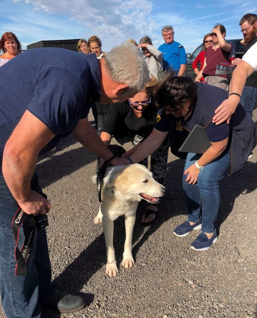 Zeus a Romanian rescue dog on transport day | 1 Dog At a Time Rescue UK