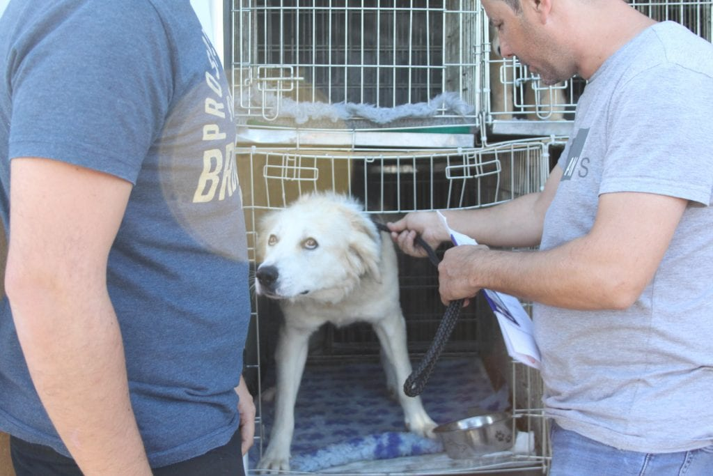 Zeus a Romanian rescue dog on the transport | 1 Dog At a Time Rescue UK | Dedicated To Rescuing and Rehoming Romanian Street Dogs
