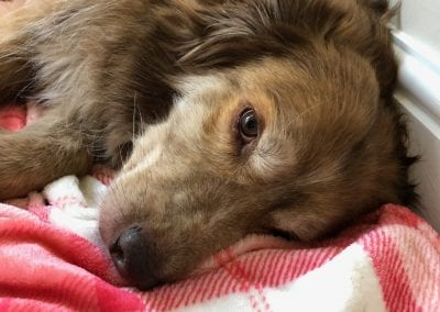 Ducu a Romanian street dog lying a pink blanket | 1 Dog At a Time Rescue UK