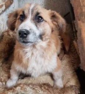 Missy a tan coloured Romanian rescue dog ¦ 1 Dog at a Time Rescue UKMissy a tan coloured Romanian rescue dog ¦ 1 Dog at a Time Rescue UK