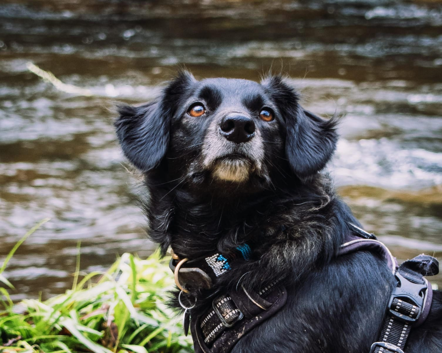 Remy a black Romanian rescue dog by a river | 1 Dog At a Time Rescue UK