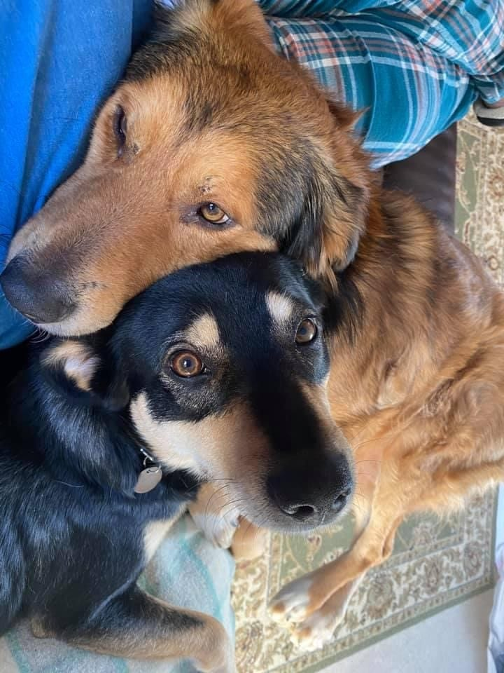 Buddy and Jambo two Romanian street dogs | 1 Dog At a Time Rescue UK