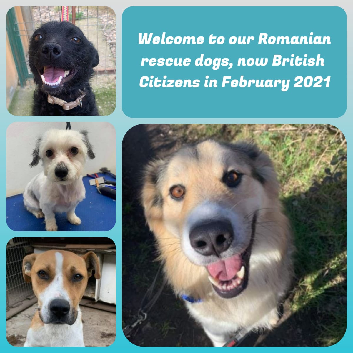 Four dogs from the transport | 1 Dog At a Time Rescue UK | Dedicated To Rescuing and Rehoming Romanian Street Dogs
