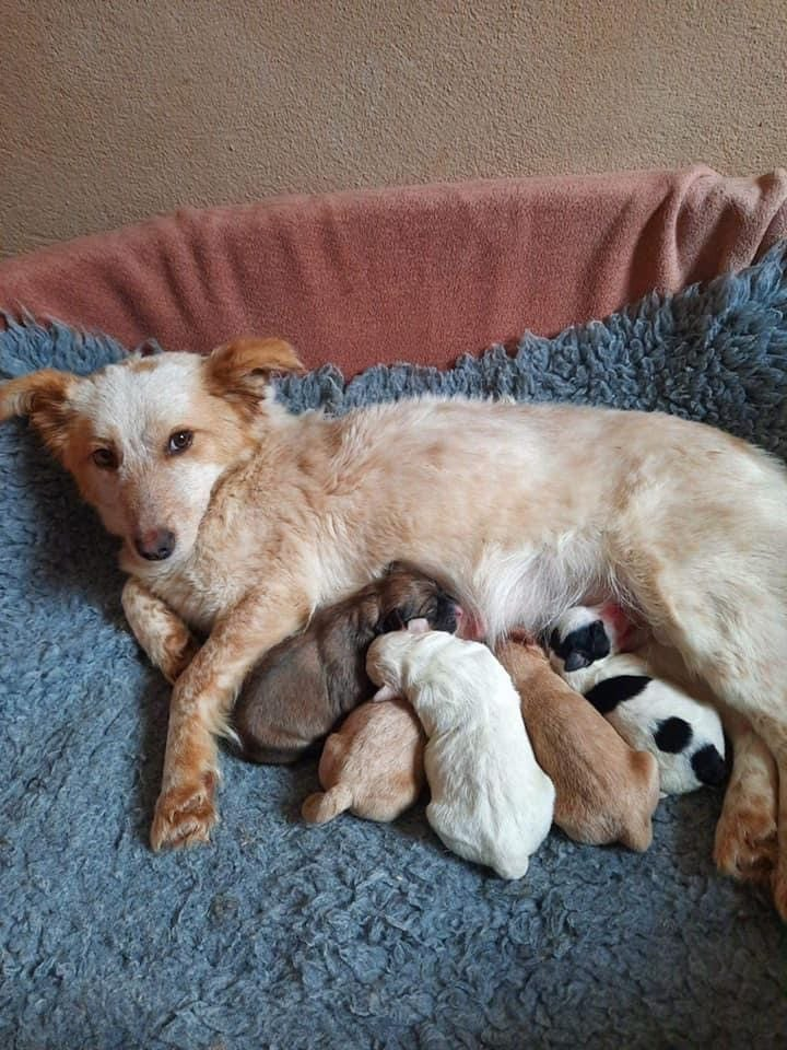 Jinni a Romanian rescue with her puppies | 1 Dog At a Time Rescue UK