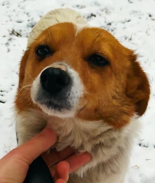 Mia a Romanian street dog | 1 Dog At a Time Rescue UK