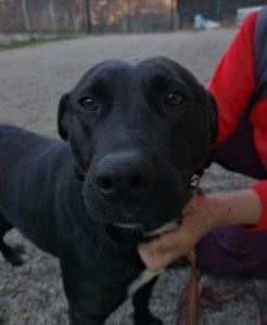 Emily a black Romanian rescue dog | 1 Dog at a Time Rescue UK
