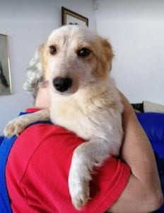 Jinni a white Romanian rescue dog | 1 Dog at a Time Rescue UK