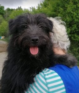 Rex a black Romanian rescue dog   1 Dog at a Time Rescue UK