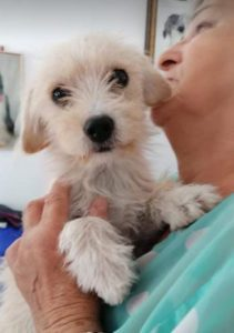 Zoe a light coloured Romanian rescue dog | 1 Dog at a Time Rescue UK