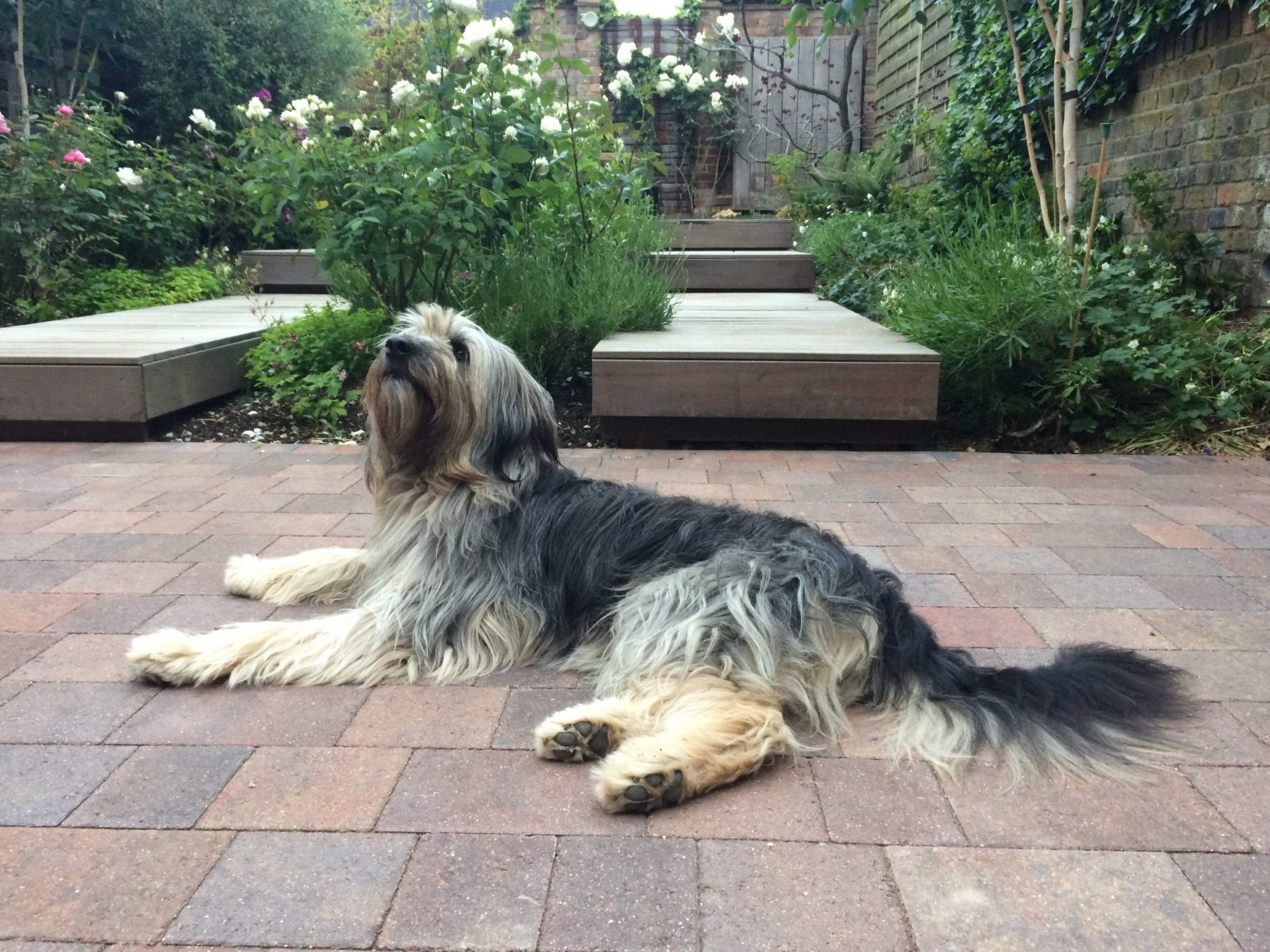 Aimee a Romanian dog in the garden | 1 Dog At a Time Rescue UK