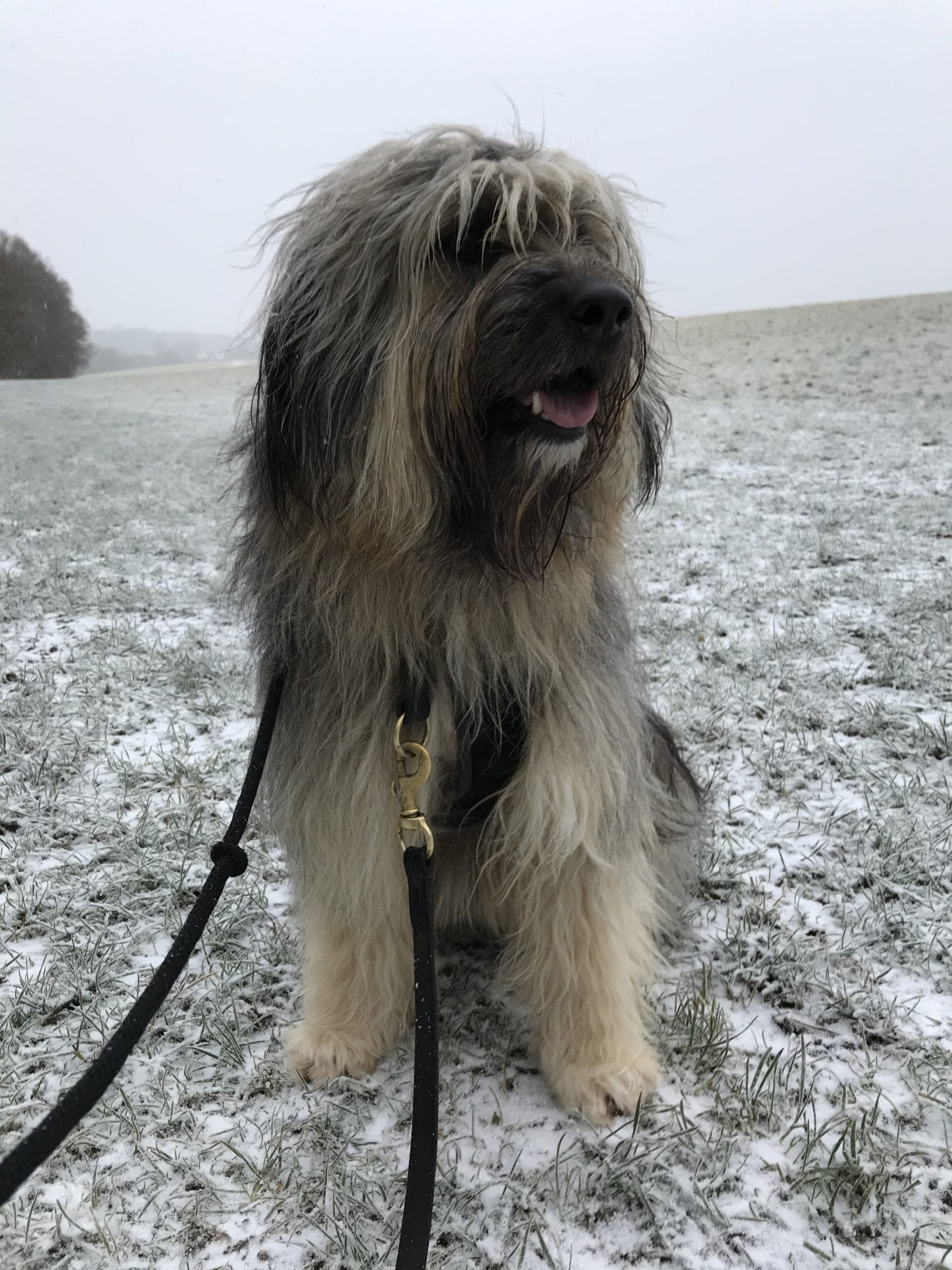 Aimee a Romanian street dog in the snow | 1 Dog At a Time Rescue UK