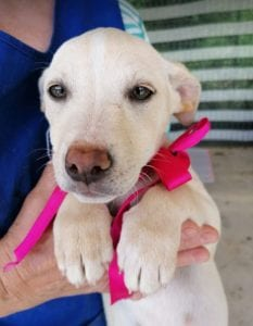 Ellie a white Romanian rescue dog   1 Dog at a Time Rescue UK