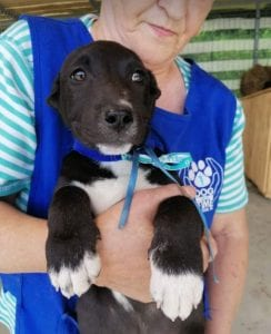 Jonnie a black and white Romanian rescue puppy   1 Dog at a Time Rescue UK