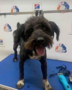 Mikky a black Romanian rescue dog | 1 Dog at a Time Rescue UK
