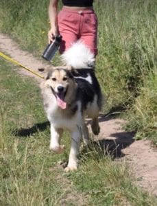 Milo Romanian Rescue Dog ¦ 1 Dog at a Time Rescue UK